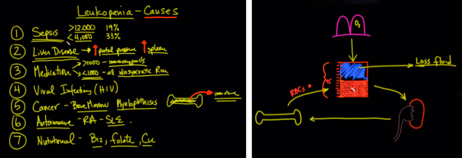 Leukopenia causes and neutropenia