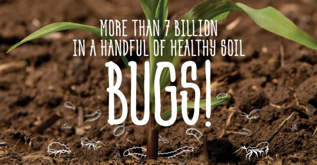 Image containing text, More than 7 billion in a handful of healthy soil, Bugs!