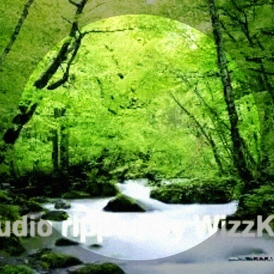 Birds chirping and singing - waterfall in background - forest atmosphere