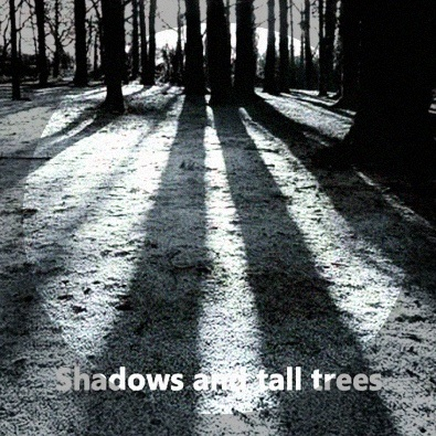 Shadows And Tall Trees