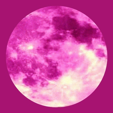 Pink Moon (cover)