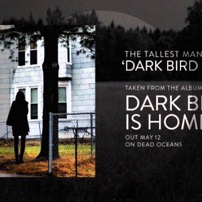 Dark Bird Is Home