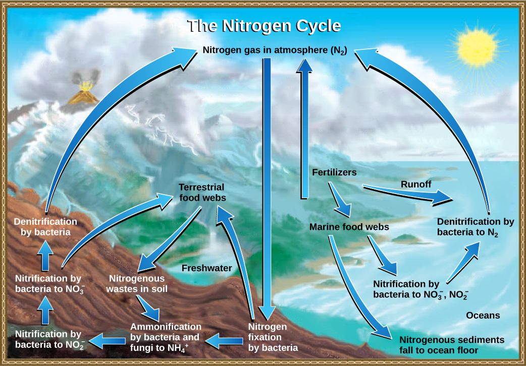 OpenStax Biology Concepts CH20 ECOSYSTEMS AND THE