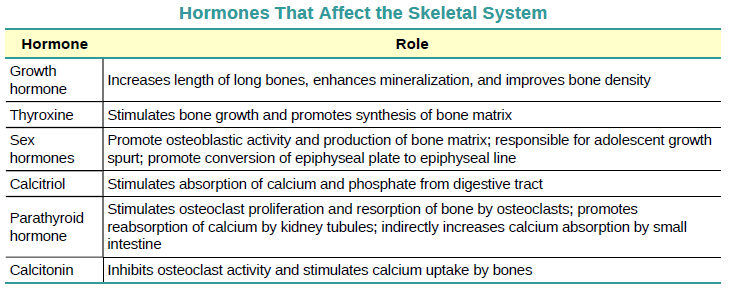 OpenStax: Anatomy and Physiology | CH6: BONE TISSUE AND THE SKELETAL