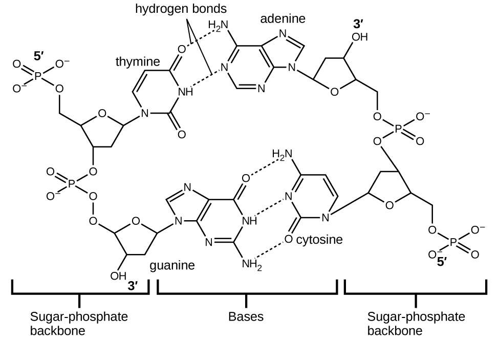 OpenStax: General Chemistry | CH 10: Liquids and Solids