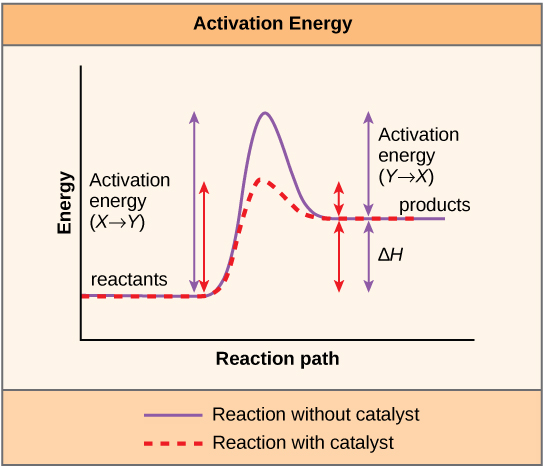 what is activation energy and how do enzymes affect it