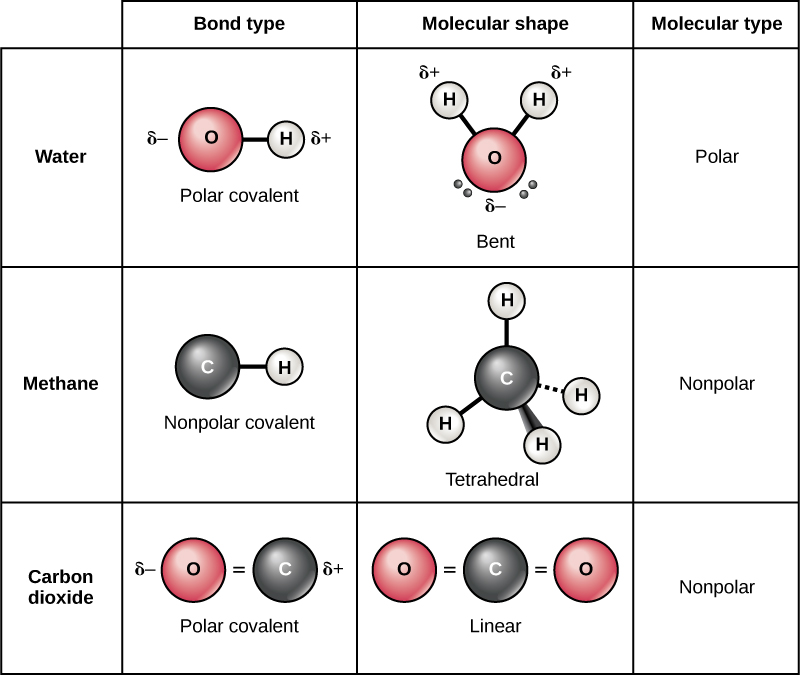 Openstax Biology Ch2 The Chemical Foundation Of Life Top Hat