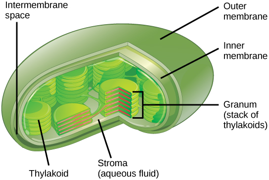Openstax Biology Concepts Ch3 Cell Structure And Function Top Hat
