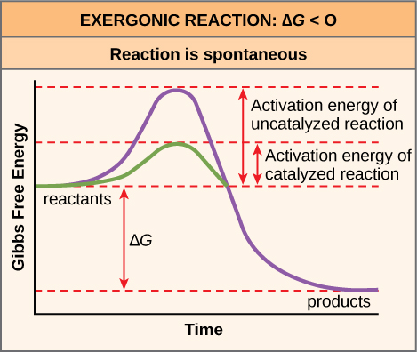 Openstax biology top hat marketplace figure 610 activation energy is the energy required for a reaction to proceed and it is lower if the reaction is catalyzed the horizontal axis of this ccuart Gallery