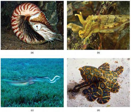 OpenStax: Biology | CH28: INVERTEBRATES | Top Hat