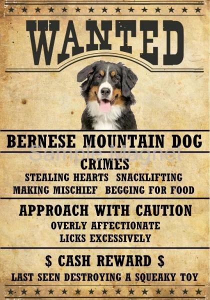 Details About Bernese Mountain Dog Wanted Poster Fridge Dog Magnet Large 35 X 5