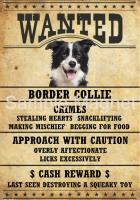 BORDER COLLIE Property Laws Magnet Personalized