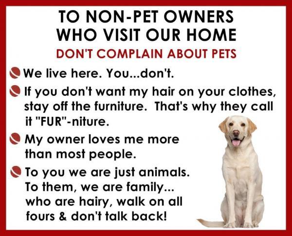 GOLDEN RETRIEVER Non Pet Owner Magnet