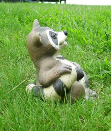 Outdoor Garden Decor Statues Photograph Sitting Raccoon An