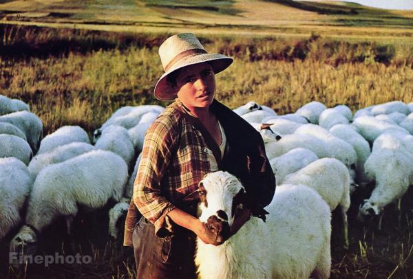 C J Adams Medici Print Shepherd and Sheep