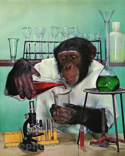 1959 MONKEY HUMOR Chimpanzee SCIENTIST Microscope Lab Doctor Animal Photo  Art | eBay