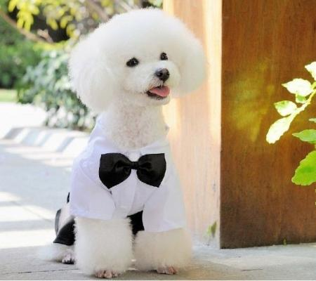 cute boy dog clothing 4 leg business suits pants free shipping ebay