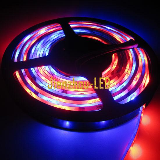 Dream color Horse Race Flash RGB SMD Led Strip & Controller