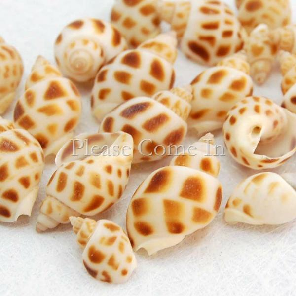 100 mini natural conch seashell wedding table decorations for Miniature tree decorated with sea shells