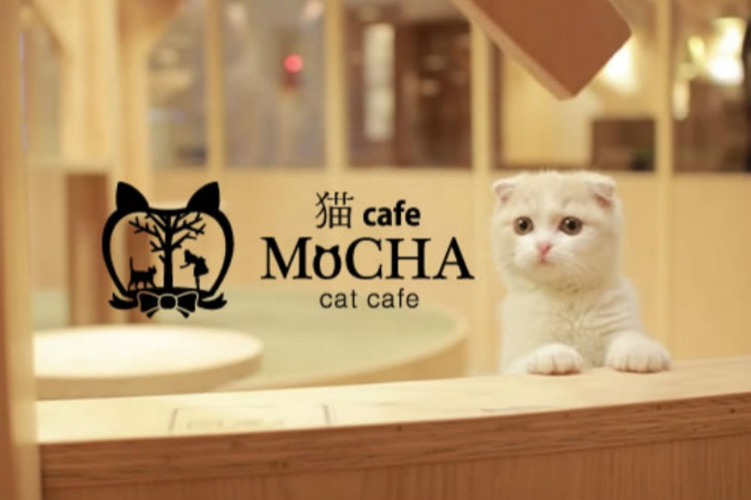 Support Your Local Cat Cafe Thr Blog Blogs The Hedgehog Review