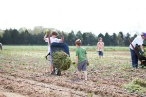 shalom farms kids