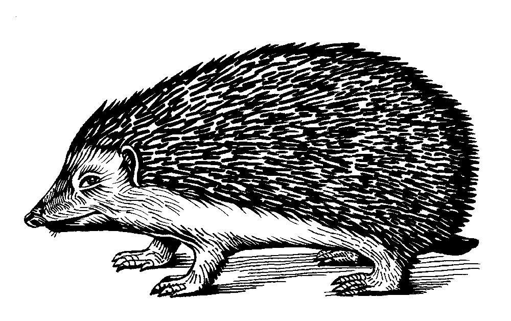 hedgehog_logo_placeholder