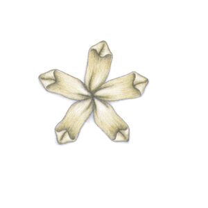 A flower created using the ribbon stitch.