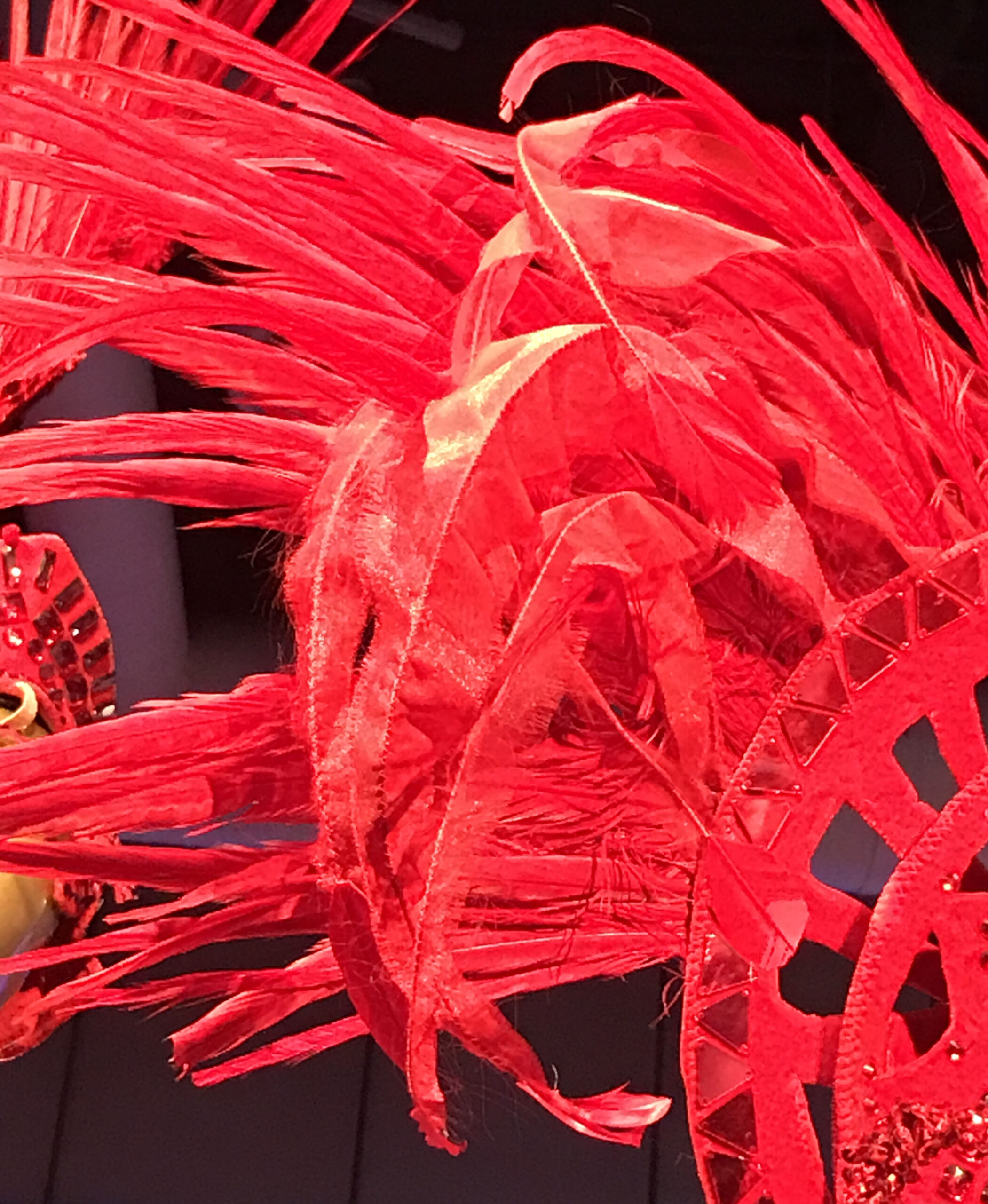 Close-up of feathers on showgirl costume