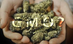 Can Cannabis Cure Cancer? | Thrive