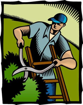 a man cutting hedges