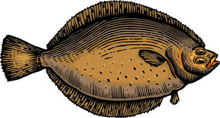A drawing of a flounder