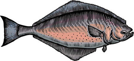 A drawing of a halibut