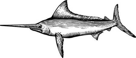 A black and white drawing of a marlin