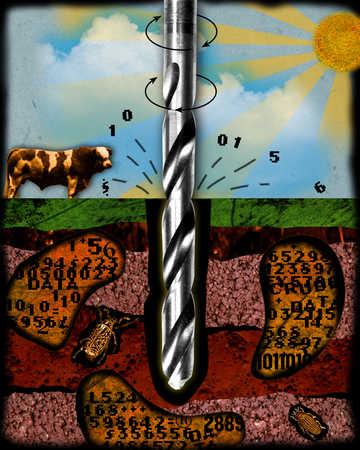 Drilling, cow, sun