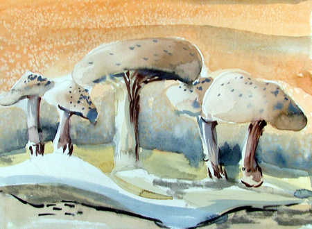 Close-up of white mushrooms growing