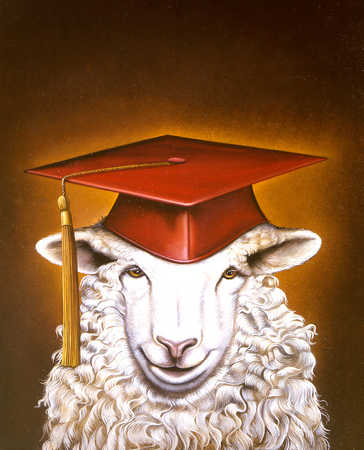 A sheep with a mortarboard in orange background