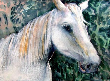 Illustration of white horse