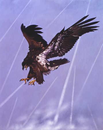 Eagle landing feet first