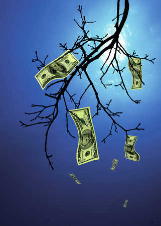Money falling off tree branch