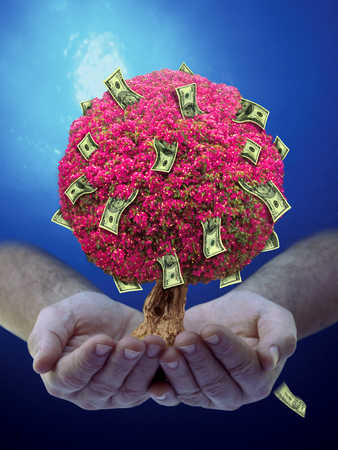 Hands holding tree with money