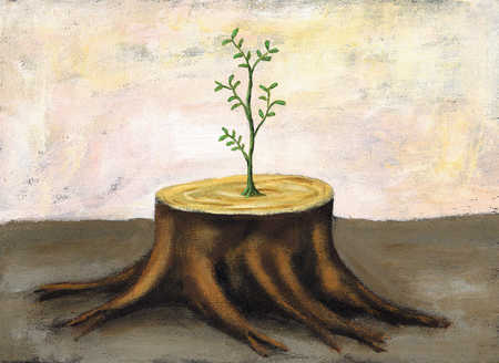 Sapling growing on stump
