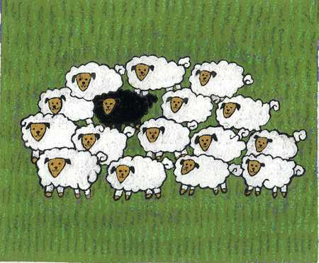Black Sheep Among Flock
