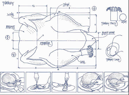 Blueprint drawing of a turkey