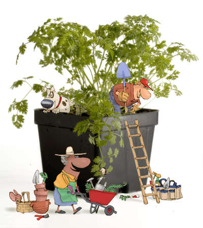 Herb gardeners working with a chervil plant