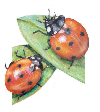 Two ladybugs on two leaves