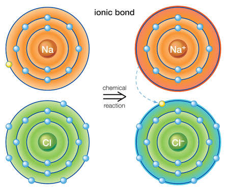 An ionic bond stems from the transfer of electrons from one atom to another The resulting ions form a stable molecule
