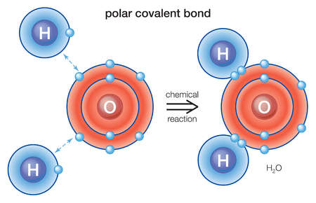 In polar covalent bonds, the electrons are shared, rather than being transferred from one atom to the other as in an ionic bond