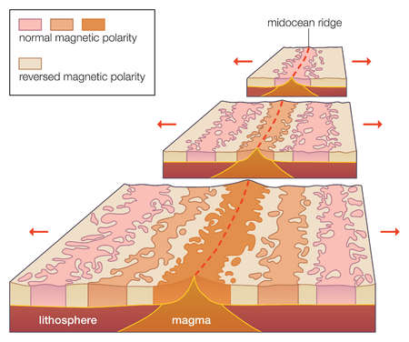 The existence of parallel magnetic anomalies in the oceanic crust corroborates the hypothesis of seafloor spreading