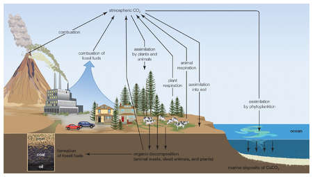 The generalized carbon cycle