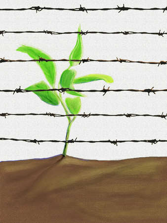 Sapling behind barbed wire fence